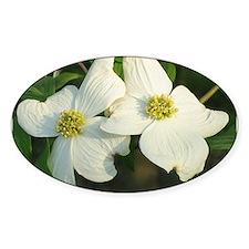 Dogwood Flowers Oval Decal