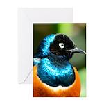 Superb Starling Greeting Card