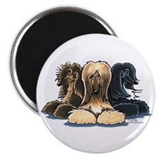 "3 Afghan Hounds 2.25"" Magnet (10 pack)"