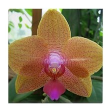 Orchid Perfection Tile Coaster