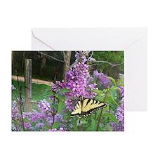 Tiger Swallowtail Greeting Cards (Pk of 20)