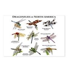 Dragonflies of North America Postcards (Package of