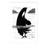 Killer Whale Pen & Ink Postcards (8 Pk)