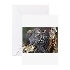 Bob Cat Greeting Cards (Pk of 10)