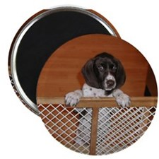 "German Shorthaired Pointer Pu 2.25"" Magnet (10 pac"