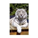 White Tiger 9 Rectangle Decal