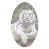 White Tiger 9 Oval Decal