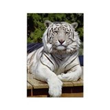 White Tiger 9 Rectangle Magnet