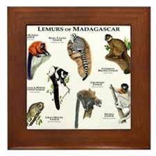 Lemurs of Madagascar Framed Tile