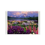 Can You Find Jesus? Rectangle Magnet (10 pack)
