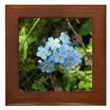 Forget-Me-Not #01 Framed Tile