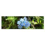 Forget-Me-Not #01 Bumper Sticker