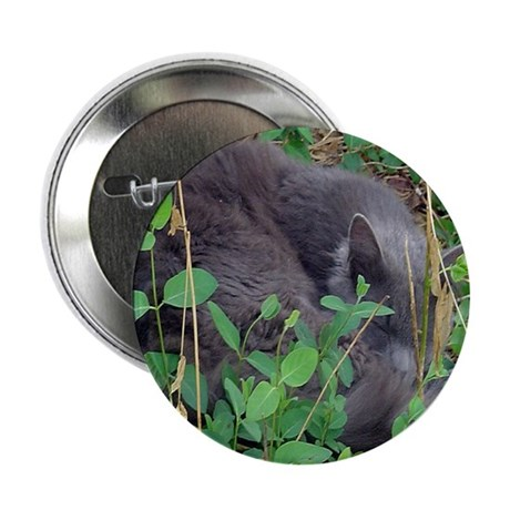 "Kitten in Honeysuckle 2.25"" Button (10 pack)"