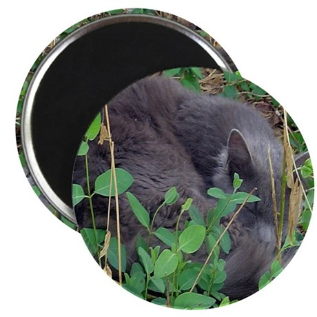 "Kitten in Honeysuckle 2.25"" Magnet (10 pack)"