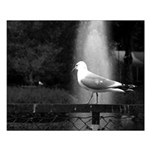 seagulls01 Small Poster