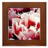 Pink Tulips Framed Tile