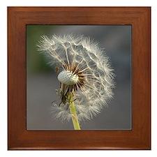 Cute Dandelion Framed Tile