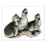 Tufted Toulouse Goslings Small Poster