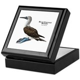 Blue-Footed Booby Keepsake Box