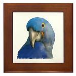 Hyacinth Macaw Framed Tile