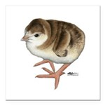 "Bourbon Red Poult Square Car Magnet 3"" x 3&qu"