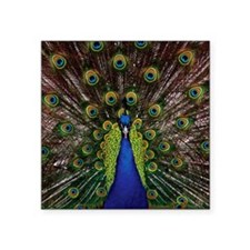 "Peacock Square Sticker 3"" x 3"""