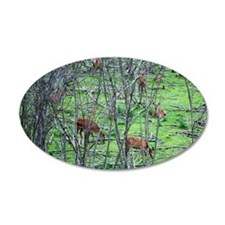 Red Deers in Saguenay Forest 22x14 Oval Wall Peel
