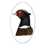 Ringneck Rooster Head Sticker (Oval 50 pk)