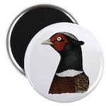 """Ringneck Rooster Head 2.25"""" Magnet (10 pack)"""