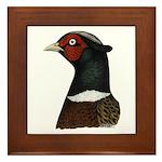 Ringneck Rooster Head Framed Tile