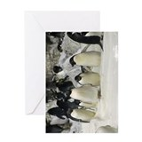 Group of Adelie Penguins Greeting Card