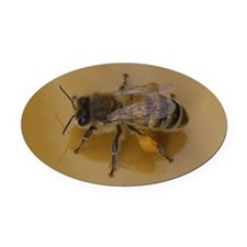 Bee Oval Car Magnet