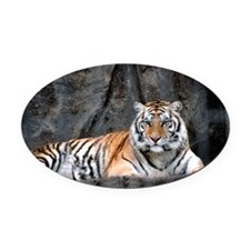 Resting Tiger Oval Car Magnet