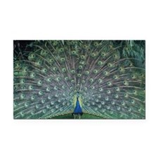 Peacock 435543 Rectangle Car Magnet.)