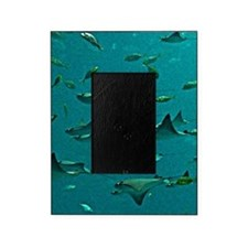 Stingrays Picture Frame
