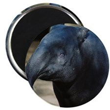 "Portrait of a Malayan Tapir 2.25"" Magnet (10 pack)"