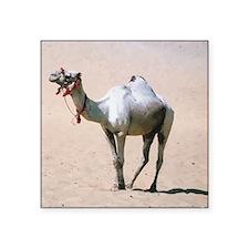 """Cute Camel Square Sticker 3"""" x 3"""""""