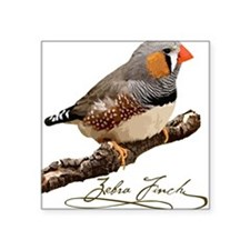 Zebra finch Square Sticker