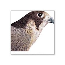 Peregrine Falcon Square Sticker