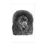 Black poodle Sticker (Rectangle 10 pk)