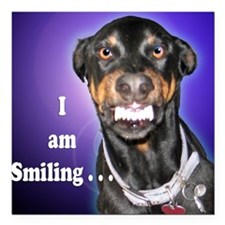 Doberman Pinscher Smiles Square Car Magnet