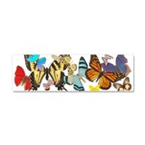 butterfly836h0106trans.png Car Magnet 10 x 3