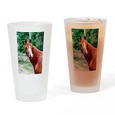 Scarlet Elegance Arabian mare Drinking Glass