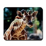 Curious Baby Reticulated Giraffe Mousepad