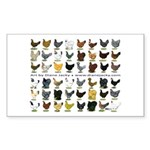 48 Hens Promo Sticker (Rectangle 10 pk)