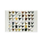 48 Hens Promo Rectangle Magnet (100 pack)