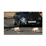 Piglets rectangle car magnet