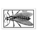 insect Rectangle Decal
