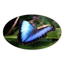Blue Morpho Butterfly 2 Decal