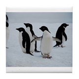 Adelie Penguin in Antarctica Tile Coaster